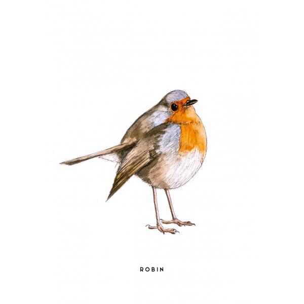 Ansichtkaart Roodborstje - 10 stuks