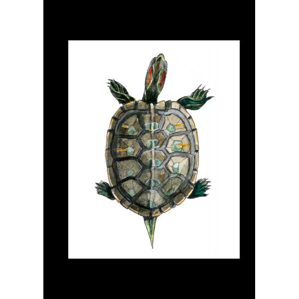 Ansichtkaart Schildpad - 10 stuks