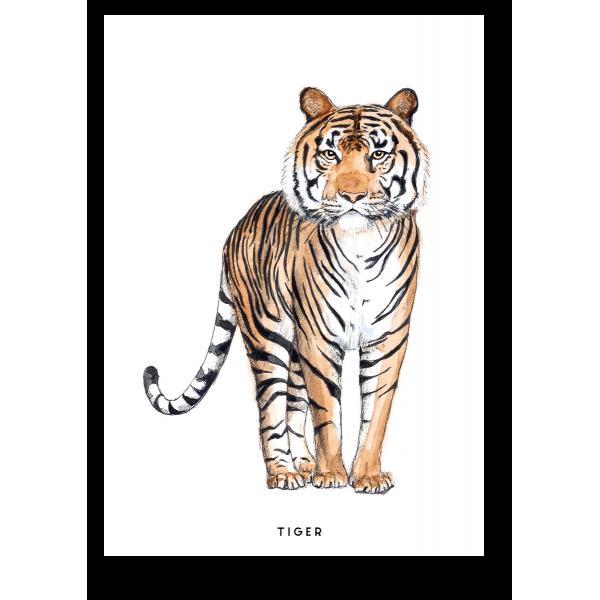 Ansichtkaart Tijger - 10 stuks