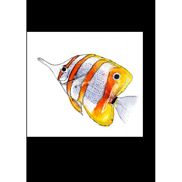 Ansichtkaart Vlindervis - 10 stuks