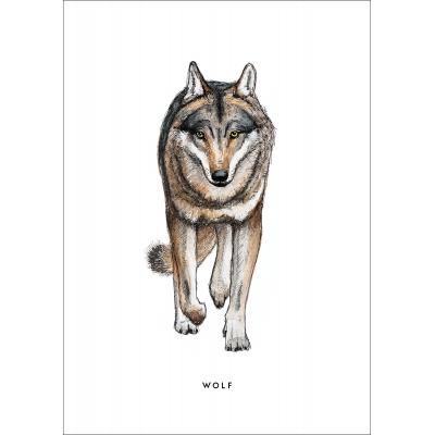 Ansichtkaart Wolf - 10 stuks