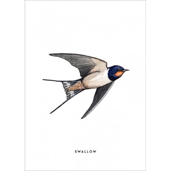 Ansichtkaart Zwaluw - 10 stuks