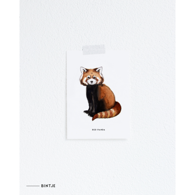 Ansichtkaart Rode panda - 10 stuks