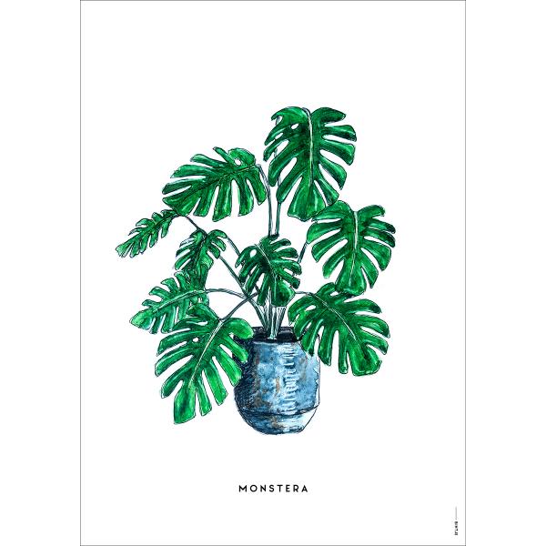 Poster Plant Monstera  - 6 stuks