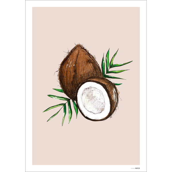 Poster Food Cocosnoot 15x20cm - 6 stuks