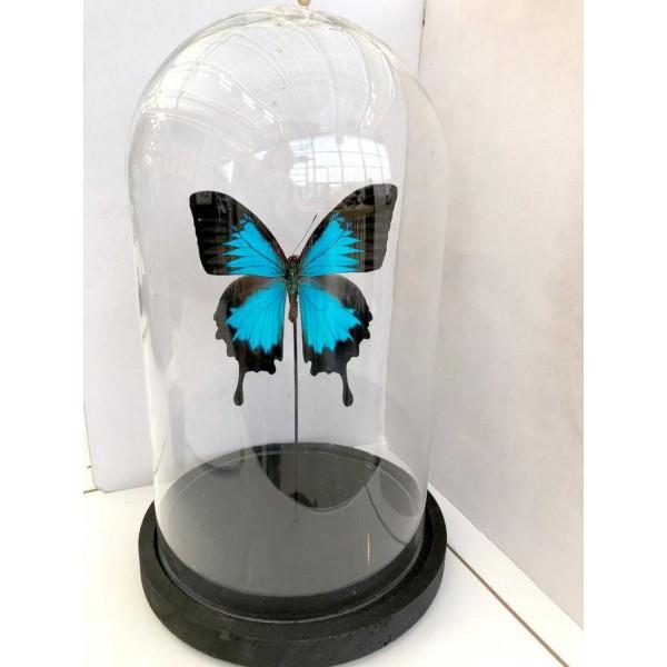 Vlinder in Large stolp - 3 stuks