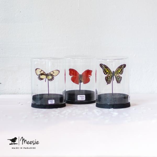 Vlinder in Mini stolp met kurk - 3 stuks